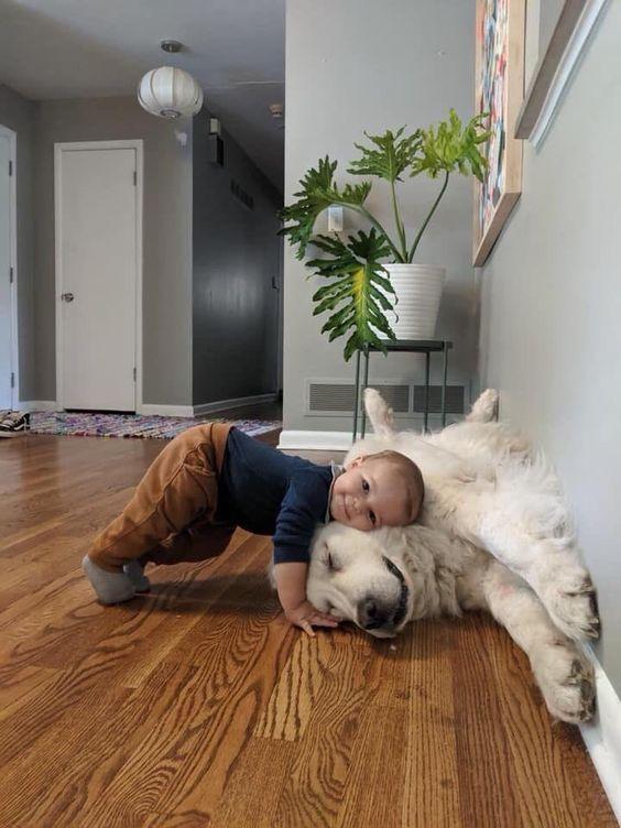 crianças com cachorros