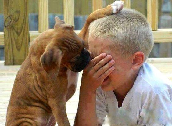 Cachorro consolando