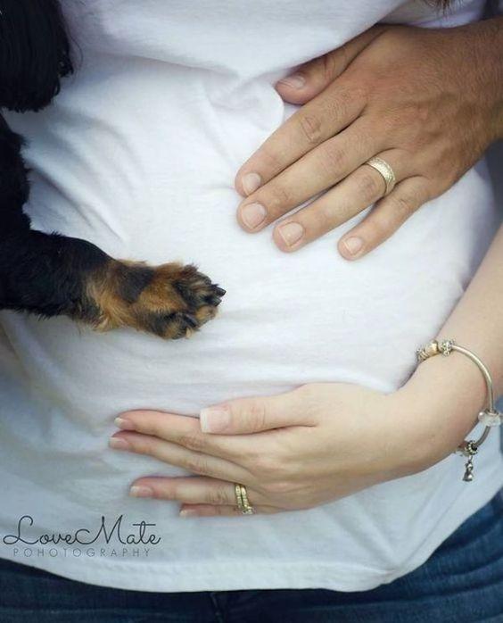 grávida com cachorro